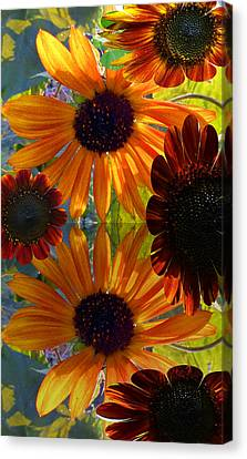 Sunflower Bursts Canvas Print by Tina M Wenger