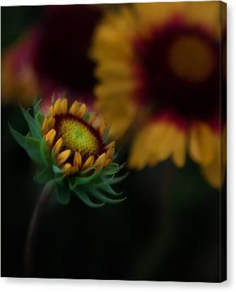 Sunflower Canvas Print by Cherie Duran