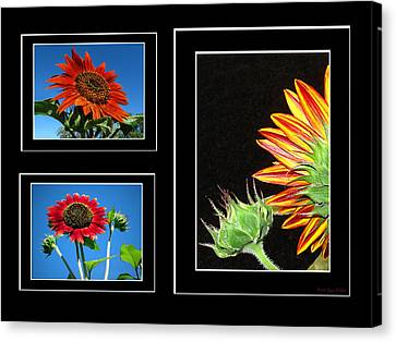 Canvas Print featuring the photograph Sunflower Collage by Joyce Dickens