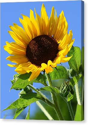 Canvas Print - Sunflower by DazzleMe Photography