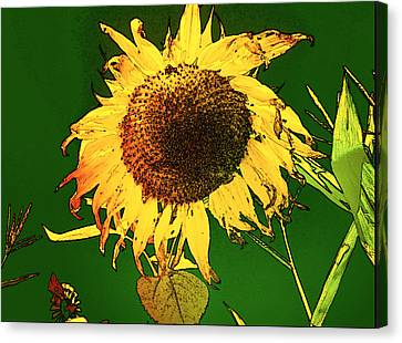 Canvas Print - Sunflower Farm by Cadence Spalding