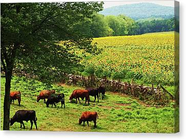 Canvas Print featuring the photograph Sunflower Farm by John Scates