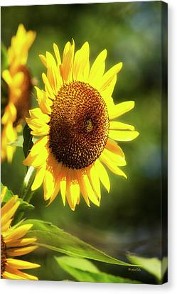 Canvas Print featuring the photograph Sunflower Field by Christina Rollo