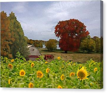 Sunflower Field In Cheshire Canvas Print