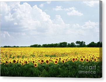 Canvas Print - Sunflower Field by Tamyra Ayles