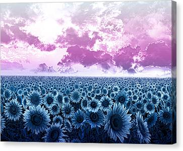 Digital Sunflower Canvas Print - Sunflower Fields 3 by Bekim Art