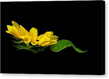 Canvas Print featuring the photograph Sunflower Float by Elsa Marie Santoro