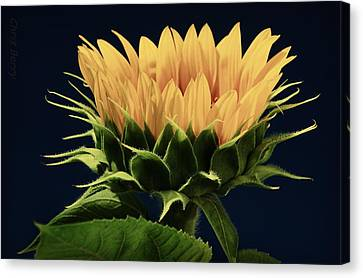 Canvas Print featuring the photograph Sunflower Foliage And Petals by Chris Berry