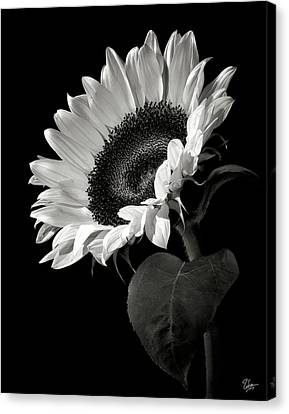 White Flower Canvas Print - Sunflower In Black And White by Endre Balogh