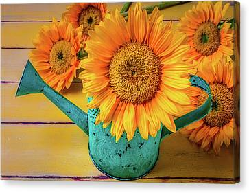 Sunflower In Green Watering Can Canvas Print