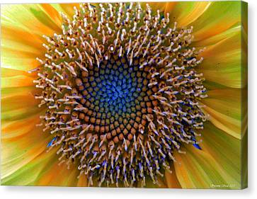 Sunflower Jewels Canvas Print