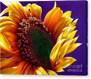 Sunflower Canvas Print by Jurek Zamoyski