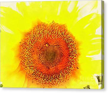 Sunflower - Love Blooming Canvas Print by Janine Riley