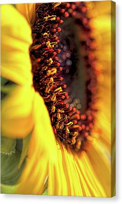Canvas Print featuring the photograph Sunflower Macro by Jennie Marie Schell