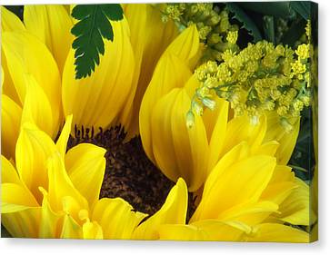 Sunflower Macro Canvas Print by Tom Mc Nemar