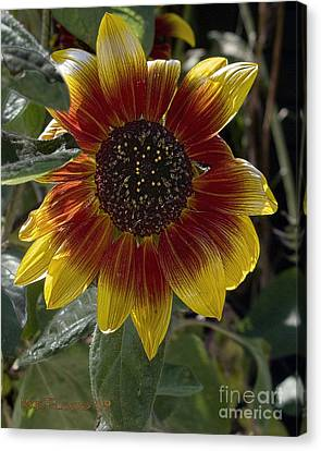 Canvas Print featuring the photograph Sunflower by Michael Flood