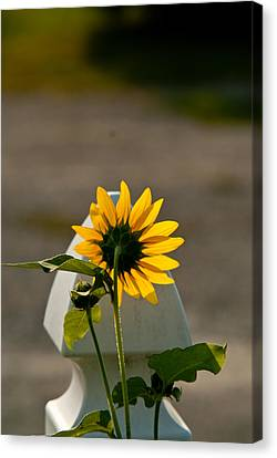 Sunflower Morning Canvas Print by Douglas Barnett