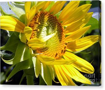 Sunflower No.35 Canvas Print by Christine Belt