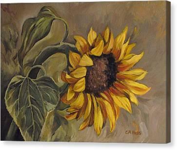 Sunflower Nod Canvas Print by Cheryl Pass