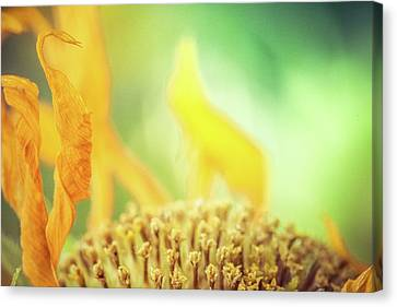 Autum Abstract Canvas Print - Sunflower On Fire by Debi Bishop