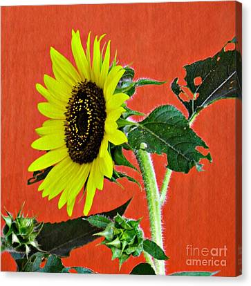 Canvas Print featuring the photograph Sunflower On Red 2 by Sarah Loft