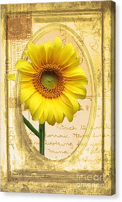 Sunflower On Vintage Postcard Canvas Print by Nina Silver