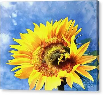 Sunflower - Reach Canvas Print by Janine Riley
