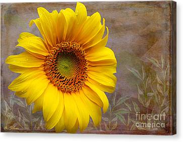 Sunflower Serenade Canvas Print by Nina Silver