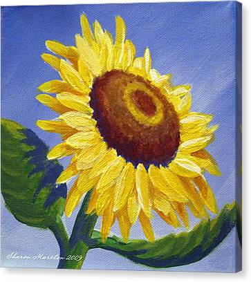 Sunflower Skies Canvas Print by Sharon Marcella Marston