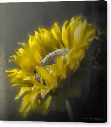 Sunflower Slumber Canvas Print