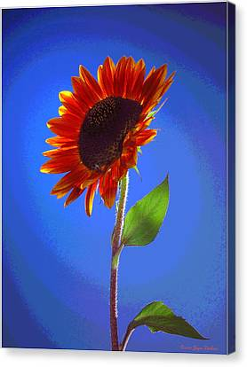 Canvas Print featuring the photograph sunflower Solitaire by Joyce Dickens