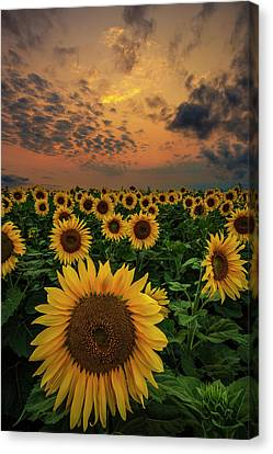 Canvas Print featuring the photograph Sunflower Sunset  by Aaron J Groen