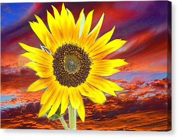 Sunflower Sunset Canvas Print by James BO  Insogna