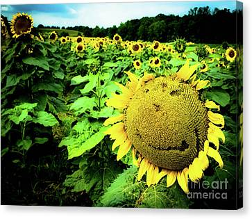 Sunflower With A Smiley Face Canvas Print by Jennifer Craft