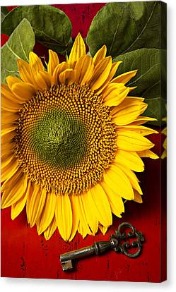 Close Up Floral Canvas Print - Sunflower With Old Key by Garry Gay