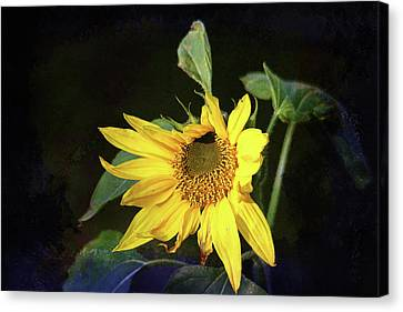 Canvas Print featuring the photograph Sunflower With Texture by Trina Ansel
