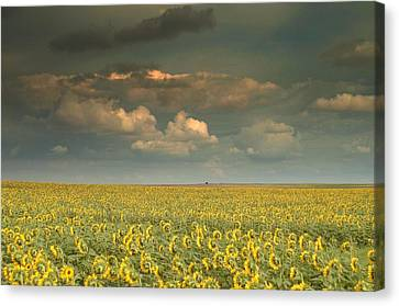 Sunflower World.. Canvas Print by Al  Swasey