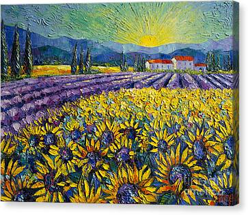 Sunflowers And Lavender Field - The Colors Of Provence Canvas Print by Mona Edulesco