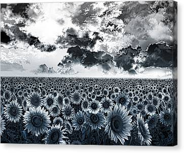 Digital Sunflower Canvas Print - Sunflowers Filed 2 by Bekim Art
