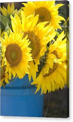Sunflowers For Sale Canvas Print