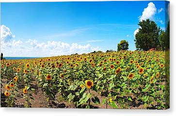 Canvas Print featuring the photograph Sunflowers In Ithaca New York by Paul Ge