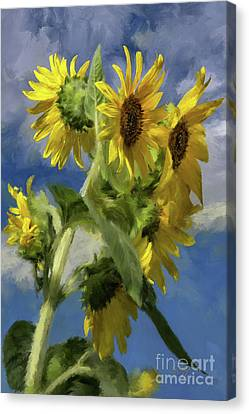 Sunflowers In The Sun Canvas Print