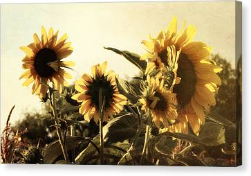 Canvas Print featuring the photograph Sunflowers In Tone by Glenn McCarthy Art and Photography