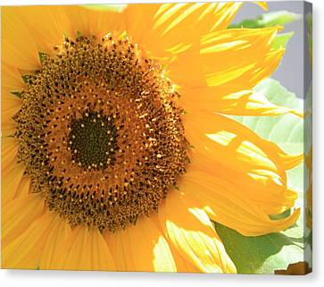 Sunflowers  Canvas Print by Marna Edwards Flavell