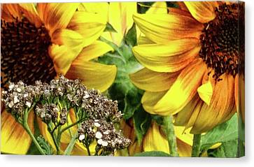 Sunflowers Canvas Print by Mikki Cucuzzo