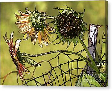 Sunflowers On A Fence Canvas Print by Susan Isakson