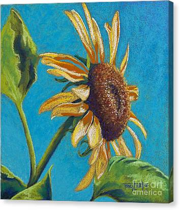 Sunflower's Shine Canvas Print by Tracy L Teeter