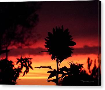 Sunflower's Sunset Canvas Print