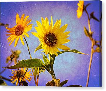 Canvas Print featuring the photograph Sunflowers - The Arrival by Glenn McCarthy Art and Photography