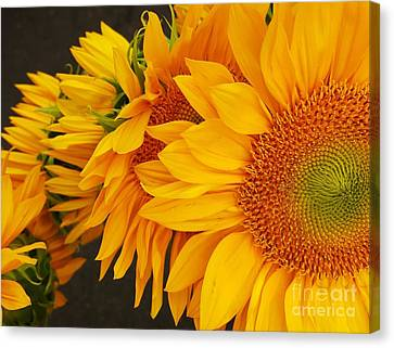 Sunflowers Train Canvas Print by Jasna Gopic
